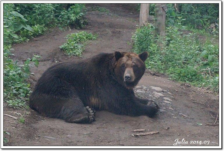 熊牧場 (3)
