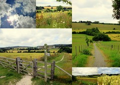 Countryside (EminemIndiannaJones) Tags: flowers summer england sky dog sun green beautiful beauty clouds landscape happy countryside gate view westsussex walk bluesky fields billy doggy paths viewpoint chichester walkies lavant