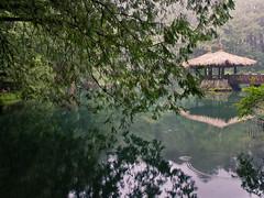 IMGP5436 (SY Huang) Tags: landscape taiwan  chiayi  alishan  sacredtree    alishannationalscenicarea alishanforestrailway