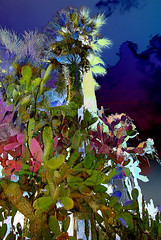 Pasadena Palms and Prickly Pear (paulalesliemorrison) Tags: california cactus composite photoshop overlay palmtree layers pasadena pricklypear
