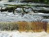 clare 028edit (barry.oshea) Tags: ireland sea white black water clare donkey ennistymon lehinch