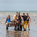 "2015_08_07_Paardenvissers_Oostduinkerke-82 • <a style=""font-size:0.8em;"" href=""http://www.flickr.com/photos/100070713@N08/20395485012/"" target=""_blank"">View on Flickr</a>"