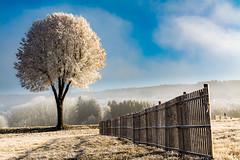 les chabouris (alain.winterberger) Tags: arbre hiver saison barrière arbres givre chabouris romandie poliezpittet echallens nikon tree trees suisse switzerland schweiz svizerra sigma vaud nature nikonpassion bfv400