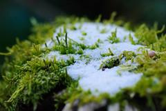 20170107_Gorge_du_Fier (5 sur 14) (calace74) Tags: fier gorgedufier lovagny rhonealpes france gel hiver neige paysage rivière