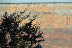 Grand Canyon 121 (Krasivaya Liza) Tags: grandcanyon grand canyon national park canyons nature natural wonder az arizona holiday christmas 2016 snowy winter cliffs cliffside edgeofcliff