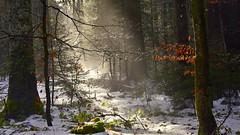 Sunrise in Black forest (flowerikka) Tags: germany blackforest schwarzwald winter beam sunrise trees snow forest stone leave wood wald