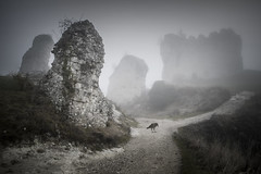 Lost (Michel Couprie) Tags: france normandy normandie vexin eure lesandelys châteaugaillard chateau castle ruines ruins decay ancient animal bird crow raven mist misty morning composition atmosphere mood canon tse24mmf35l couprie eos path wow