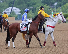 GOLDENCENTS (nflravens) Tags: horses horse usa history sports festival america md maryland baltimore gameday preakness jockey horseracing hunter racehorse thoroughbred pimlico horserace racinghorse baltimoremd baltimoremaryland preaknessstakes thoroughbredhorseracing pimlicoracetrack pimlicomd pimlicoracecourse nflravens billhunter shoreshotphotography marylandjockeyclub pimlicomaryland pimlicoracing pimlicomaryalnd mdjockeyclub preaknesstradition getyourpreakon goldencents 138thpreaknessstakes 138thprealness