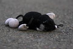 Fallen warrior (Fardo.D) Tags: white black cat keychain pavement gatos gato fallen warrior plushe