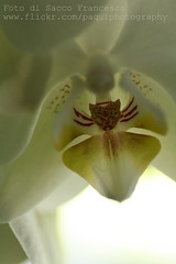 Orchid detail (PaquiPhotography) Tags: life light orchid flower colour macro nature canon eos photo energy power joke air bio story mm lice tamron plain 90 aire tenda chrystal 1000d