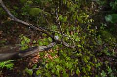 NLC_0786 (Laura Carrier) Tags: forêt vercors col sainalexis escargot nikon d7000 photographie photography photo france association mille traces laura carrier