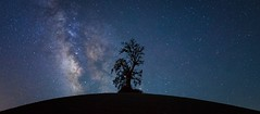 all alone II. (Silent G Photography) Tags: california nightphotography panorama cali nikon wine pano astrophotography nikkor centralcoast winecountry vino pasorobles milkyway reallyrightstuff rrs nikond800 markgvazdinskas silentgphotography silentgphoto