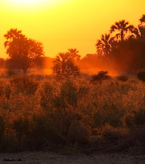 Botswana - Okavango Delta - Maun (jschort10) Tags: africa birds skeleton coast wildlife lion safari zimbabwe elephants botswana namibia chobe moremi etosha himba vlei sossus canonsx50 schwakopmund