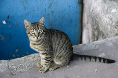 Turkish Cats 12 (Pablo Rodriguez M) Tags: cat turkey feline chat asia europa europe trkiye gato felino neko kedi turqua