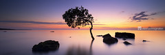 Spring morning (Garry - www.visionandimagination.com) Tags: panorama nature water sunrise outdoors dawn bay scenic singletree dreamscape pastell