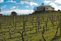 Hahndorf Hills Wine (QuikSink) Tags: winter green vineyard vines wine australia hills winery southaustralia hahndorf 2013 sigmadp2merrill hahndorfhillswine