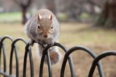 DSC_0338 (Ernestho317) Tags: london nikon squirrel hydepark d90 1685mm