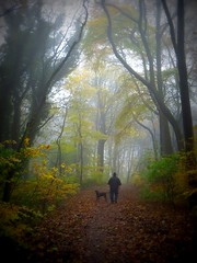 man with dog in misty autumn wood (togwood) Tags: autumn trees dog mist man fall canon path picasa vignette lomoish wigan sx240