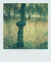 Autumn Instant (Pictures from the Ghost Garden) Tags: trees film southwales wales square polaroid lofi parks plastic tip integral instant analogue 1000 plasticcamera impossible plasticlens instantfilm aberdare polaroid1000 impossibleproject