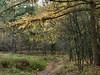 The colours of autumn (joeke pieters) Tags: autumn holland fall nature netherlands forest woodland woods herfst nederland larch bos achterhoek winterswijk natuurmonumenten gelderland lariks corle mentink blinkagain 1120210 panasonicdmcfz150