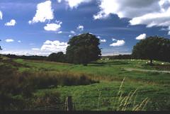 Muirkirk Canal 1
