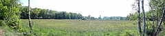Panoramic view of nature reserve De Bunsing, Zeist, Netherlands - 1382