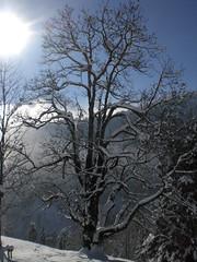 Winter Tree (bookhouse boy) Tags: winter mountains alps berge alpen tyrol achenkirch achensee karwendel achental hochplatte 2013 jochalm seewaldhtte brndlalm 1dezember2013