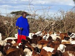 Serengeti - Massai home