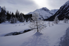 Engadin (RS_1978) Tags: schnee winter snow mountains alps alpes schweiz nieve sneeuw berge neve che neige alpen sn montagnes pontresina graubnden    sonycybershotdscrx1 typcompact vision:mountain=0925 vision:outdoor=099 vision:snow=082 vision:sky=0808