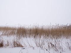 Reeds in mist (blaahhi) Tags: winter sea mist snow ice fog espoo suomi reeds balticsea shore uusimaa keilalahti panasoniclumixgh3 panasonicgxvario1235f28