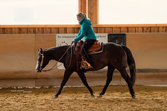 Equtitation - Western (Andreas Krappweis - thanks for 2,2 million views!) Tags: horse performance riding western workout quarterhorse equitation sal300f28g sony300mmf28gssm sonyalpha99