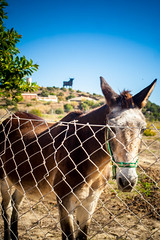 The Bull And A Donkey (k009034) Tags: life travel nature beautiful look leaves animal statue canon fence landscape photography eos 350d spain eyes wildlife hill donkey ears bull rebelxt beautifulearth lospacos