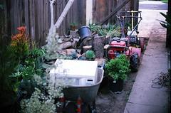 Staging Area (jjldickinson) Tags: plant garden landscaping longbeach wrigley wheelbarrow olympusom1 droughttolerant xeriscaping fujicolorsuperiaxtra400 lawntogarden promastermcautozoommacro2870mmf2842 promasterspectrum772mmuv roll490o2
