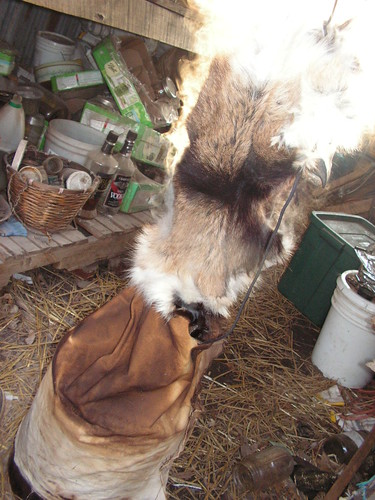goat fur smoking