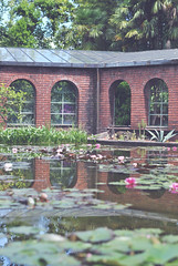 (Arianna Mameli) Tags: reflection green nature spring may greenhouse springtime