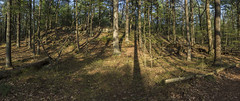 DC3280  DSC06383NX5Na Trees © 2015 Paul Light (Paul Light) Tags: trees panorama forest woods massachusetts panoramic winchester middlesexfells reallyrightstuffpanokit