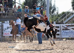 P3110134 (David W. Burrows) Tags: cowboys cowgirls horses cattle bullriding saddlebronc cowboy boots ranch florida ranching children girls boys hats clown bullfighters bullfighting