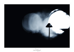 The wolf song (Naska Photographie) Tags: naska photographie photo photographe paysage proxy proxyphoto macro macrophotographie macrophoto landscape chateau mushroom noir et blanc nb monochrome nuit loup wolf lune moon dark darkness night midnight blue color collembole bokeh silhouette ombre chinoise chinoiserie