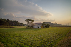 Peaceful countryside. (Yasuyuki Oomagari) Tags: countryside country rural pastral sunset light lights alone peaceful peace nikon d810 zeiss carlzeiss distagont2821 composition green clouds