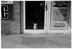 (rygielski.piotr) Tags: bessa bessr3a summicron summicronm50 analog analogowo streetphotography budapest budapeszt