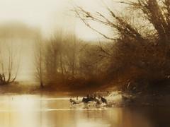 Golden lake (yve_all) Tags: licht light farben colours natur nature baum trees bäume see lake landschaft landscape blickwinkel view seelenheil romantik romantic vögel birds kormoran