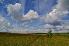 Summer parade of clouds (МирославСтаменов) Tags: russia pushchino moscowregion field birch meadow cloudscape sky horizon summer scope vastness grass