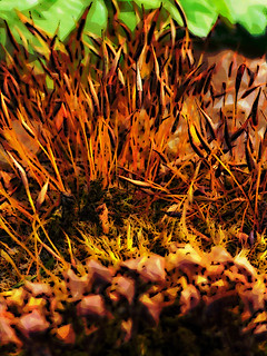 They Used to Use Moss to Make Fire