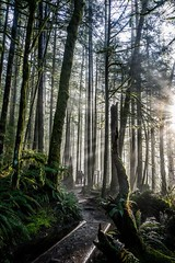 My first experience hiking in the Pacific Northwest was everything I thought it would be and more! This was taken this morning in Wallace Falls State Park (plottsdaniel) Tags: pnw pacificnorthwest seattle wallacefalls wallacefallsstatepark longexposure woods forest morning wilderness trees sun mist nikon nikkor nikond7100 washington washingtonstate