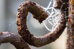Les amants désunis (Macro mondays, made of metal) (cactus2016) Tags: macro macromondays madeofmetal rouille rosée toile