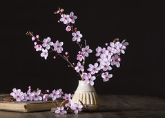 cherry blossom on brown (Emma Varley) Tags: cherryblossom spring flower indoor stilllife pink brown vase table wooden book antique old
