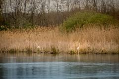 P1600810-1 (picicsoda) Tags: natura nature panasoniclumixg7 exakta 75300mm manual vintagelens countryside wildlife szelkótó lakeszelkó hungary