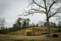 Pastoral Scene - Oconee Co., S.C. (DT's Photo Site - Anderson S.C.) Tags: canon 6d 24105mml lens westminster oconee county southcarolina liberty country road madison community church graveyard cows horses livestock farm pasture rustic rural landscape american southern southernlife