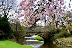 Pollok Park, Glasgow. (billmac_sco) Tags: scotland glasgow pollokpark river trees bridge landscape