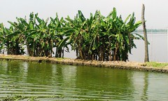 Unsubmerged Strips (Shrayansh Faria Photography) Tags: waters backwaters sky trees green plantation tropical